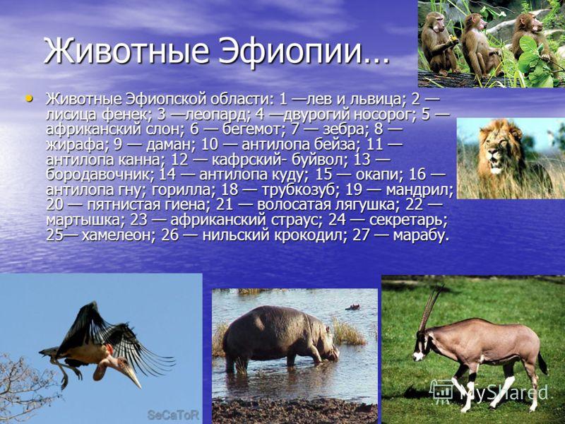 Животные Эфиопии… Животные Эфиопской области: 1 лев и львица; 2 лисица фенек; 3 леопард; 4 двурогий носорог; 5 африканский слон; 6 бегемот; 7 зебра; 8 жирафа; 9 даман; 10 антилопа бейза; 11 антилопа канна; 12 кафрский- буйвол; 13 бородавочник; 14 ант