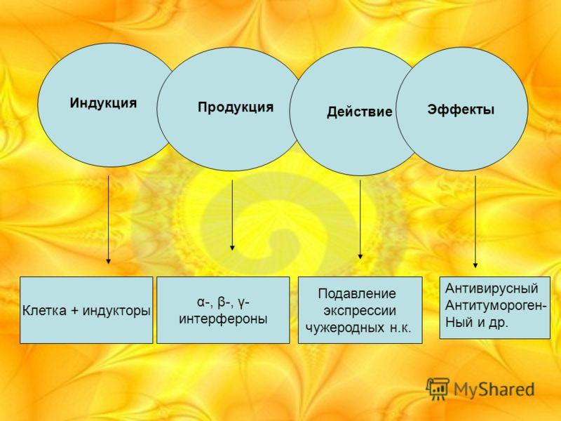 Действие Эффекты Индукция Клетка + индукторы Продукция α-, β-, γ- интерфероны Подавление экспрессии чужеродных н.к. Антивирусный Антитумороген- Ный и др.