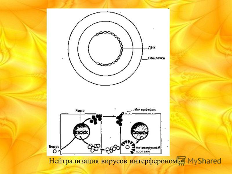 Нейтрализация вирусов интерфероном