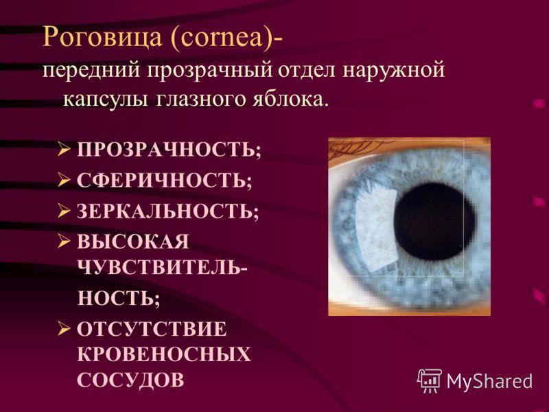 Роговица (cornea)- ПРОЗРАЧНОСТЬ; СФЕРИЧНОСТЬ; ЗЕРКАЛЬНОСТЬ; ВЫСОКАЯ ЧУВСТВИТЕЛЬ- НОСТЬ; ОТСУТСТВИЕ КРОВЕНОСНЫХ СОСУДОВ передний прозрачный отдел наружной капсулы глазного яблока.
