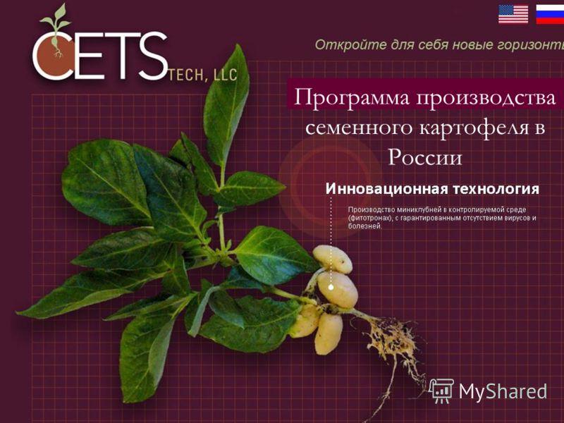 Программа производства семенного картофеля в России