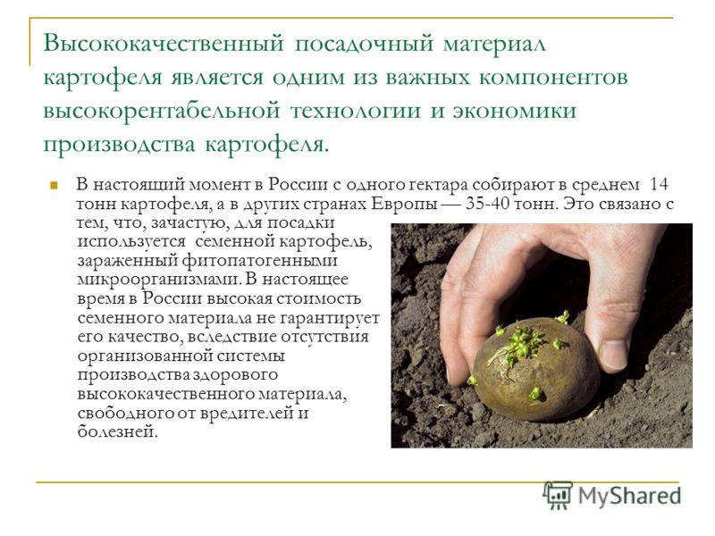Высококачественный посадочный материал картофеля является одним из важных компонентов высокорентабельной технологии и экономики производства картофеля. В настоящий момент в России с одного гектара собирают в среднем 14 тонн картофеля, а в других стра