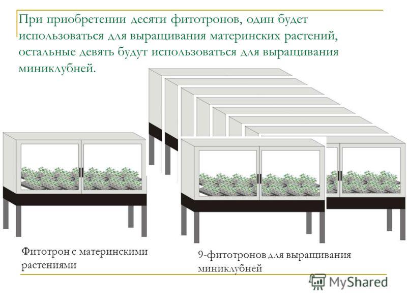 При приобретении десяти фитотронов, один будет использоваться для выращивания материнских растений, остальные девять будут использоваться для выращивания миниклубней. Фитотрон с материнскими растениями 9-фитотронов для выращивания миниклубней
