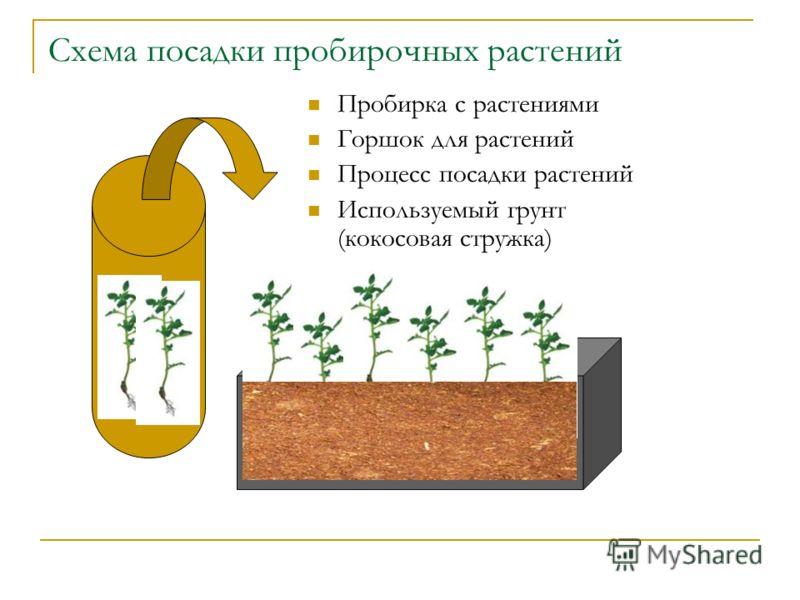 Схема посадки пробирочных растений Пробирка с растениями Горшок для растений Процесс посадки растений Используемый грунт (кокосовая стружка)
