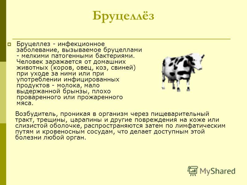 Бруцеллёз Бруцеллез - инфекционное заболевание, вызываемое бруцеллами - мелкими патогенными бактериями. Человек заражается от домашних животных (коров, овец, коз, свиней) при уходе за ними или при употреблении инфицированных продуктов - молока, мало