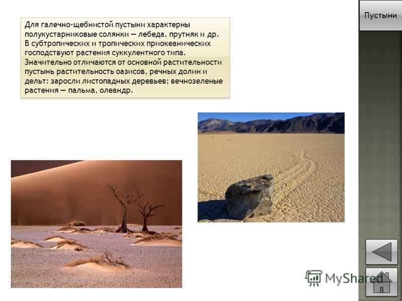 Для галечно-щебнистой пустыни характерны полукустарниковые солянки лебеда, прутняк и др. В субтропических и тропических приокеанических господствуют растения суккулентного типа. Значительно отличаются от основной растительности пустынь растительность