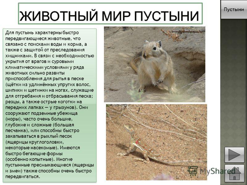 Для пустынь характерны быстро передвигающиеся животные, что связано с поисками воды и корма, a также с защитой от преследования хищниками. В связи с необходимостью укрытия от врагов и суровыми климатическими условиями у ряда животных сильно развиты п