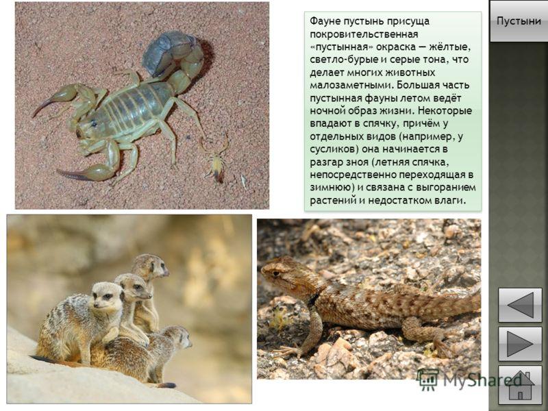 Фауне пустынь присуща покровительственная «пустынная» окраска жёлтые, светло-бурые и серые тона, что делает многих животных малозаметными. Большая часть пустынная фауны летом ведёт ночной образ жизни. Некоторые впадают в спячку, причём у отдельных ви