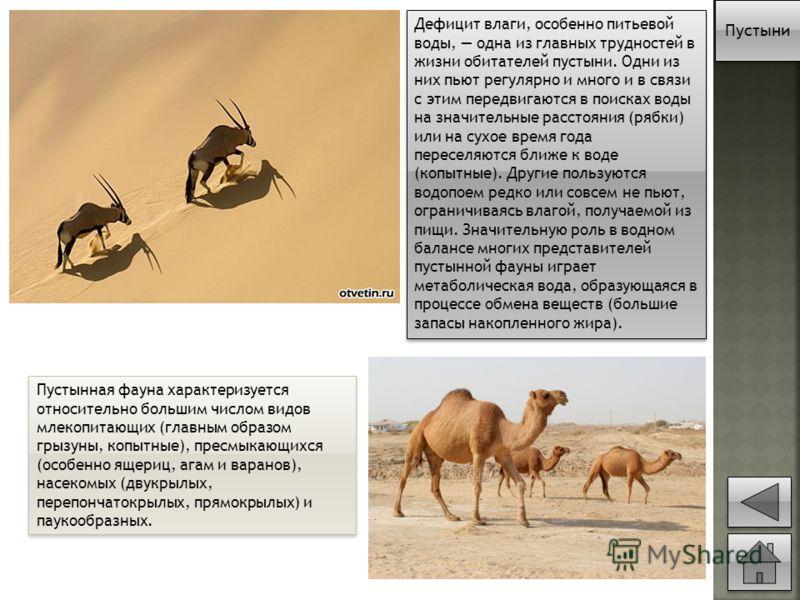 Пустынная фауна характеризуется относительно большим числом видов млекопитающих (главным образом грызуны, копытные), пресмыкающихся (особенно ящериц, агам и варанов), насекомых (двукрылых, перепончатокрылых, прямокрылых) и паукообразных. Дефицит влаг
