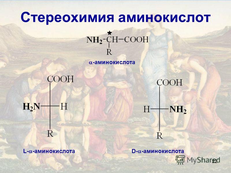 22 Стереохимия аминокислот -аминокислота L- -аминокислотаD- -аминокислота