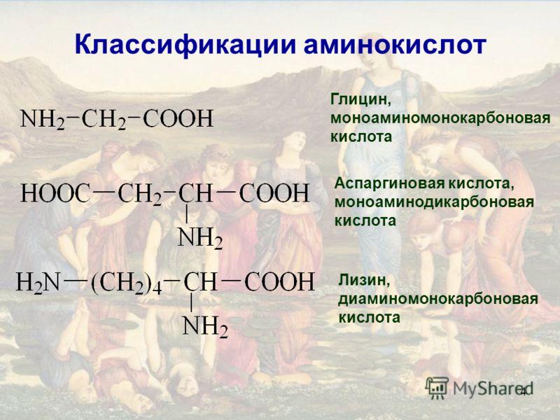 4 Классификации аминокислот Глицин, моноаминомонокарбоновая кислота Аспаргиновая кислота, моноаминодикарбоновая кислота Лизин, диаминомонокарбоновая кислота