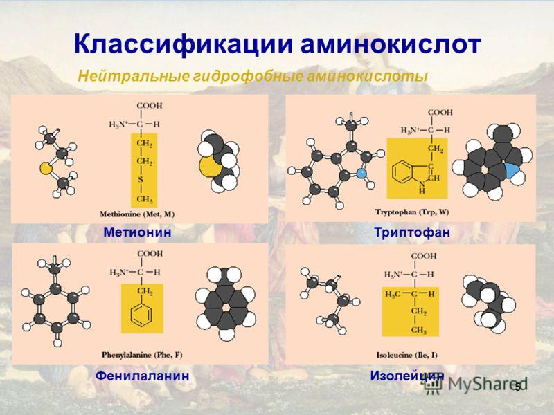 5 Классификации аминокислот Нейтральные гидрофобные аминокислоты ИзолейцинФенилаланин МетионинТриптофан