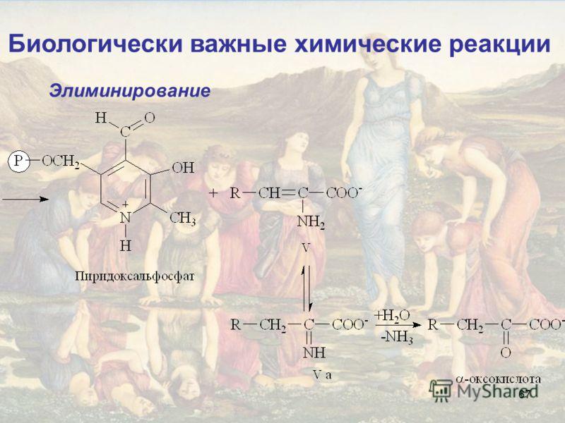 67 Биологически важные химические реакции Элиминирование