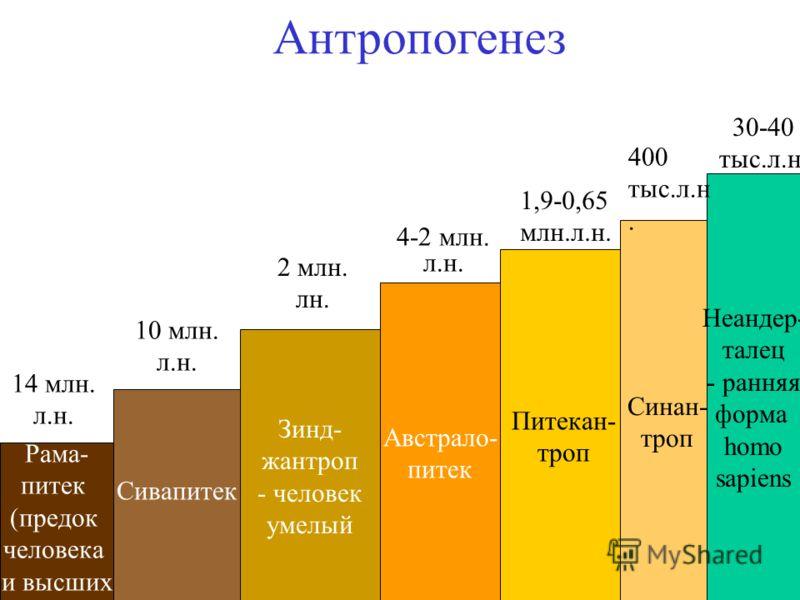 Антропогенез Рама- питек (предок человека и высших обезьян) Сивапитек Зинд- жантроп - человек умелый Австрало- питек Питекан- троп Синан- троп Неандер- талец - ранняя форма homo sapiens 14 млн. л.н. 10 млн. л.н. 2 млн. лн. 4-2 млн. л.н. 1,9-0,65 млн.