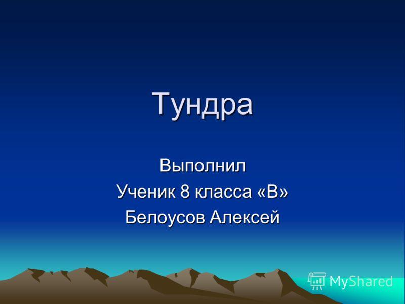 Тундра Выполнил Ученик 8 класса «В» Белоусов Алексей
