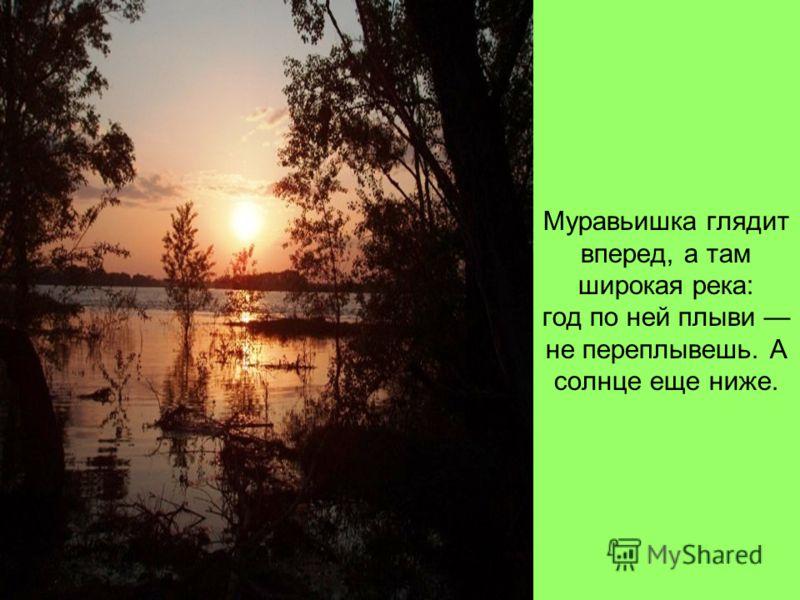 Муравьишка глядит вперед, а там широкая река: год по ней плыви не переплывешь. А солнце еще ниже.