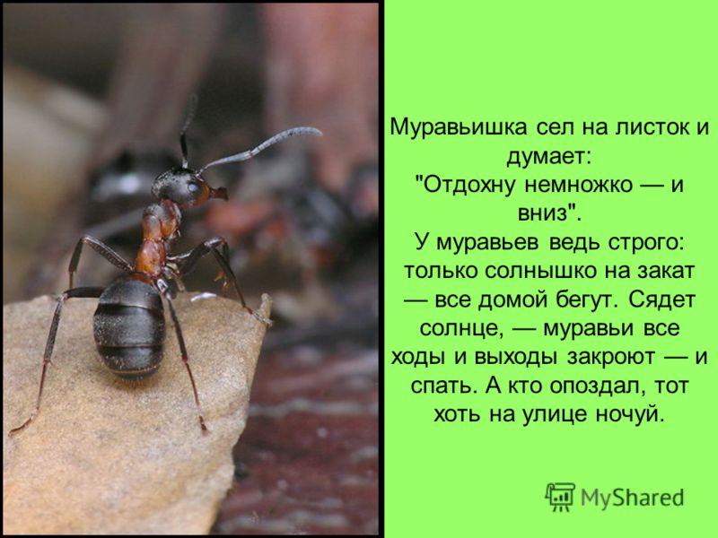 Муравьишка сел на листок и думает: Отдохну немножко и вниз. У муравьев ведь строго: только солнышко на закат все домой бегут. Сядет солнце, муравьи все ходы и выходы закроют и спать. А кто опоздал, тот хоть на улице ночуй.