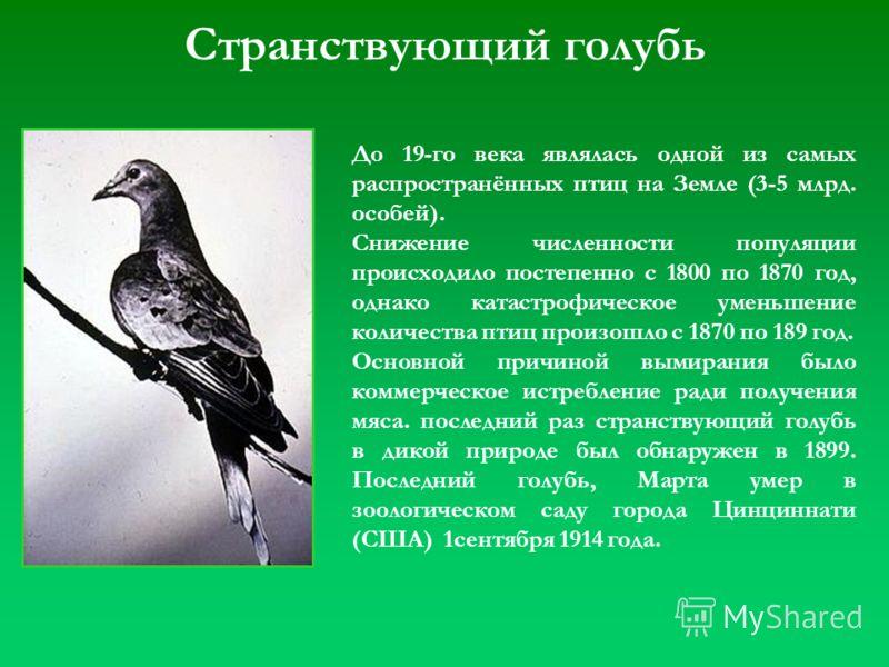 Странствующий голубь До 19-го века являлась одной из самых распространённых птиц на Земле (3-5 млрд. особей). Снижение численности популяции происходило постепенно с 1800 по 1870 год, однако катастрофическое уменьшение количества птиц произошло с 187