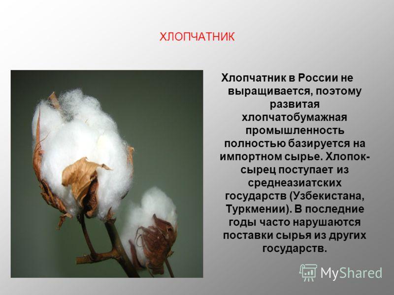 ХЛОПЧАТНИК Хлопчатник в России не выращивается, поэтому развитая хлопчатобумажная промышленность полностью базируется на импортном сырье. Хлопок- сырец поступает из среднеазиатских государств (Узбекистана, Туркмении). В последние годы часто нарушаютс