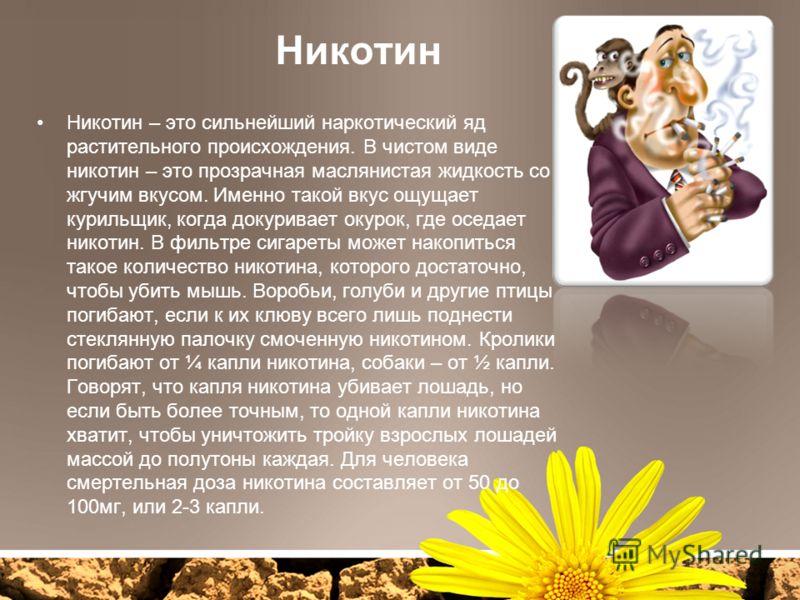 Никотин Никотин – это сильнейший наркотический яд растительного происхождения. В чистом виде никотин – это прозрачная маслянистая жидкость со жгучим вкусом. Именно такой вкус ощущает курильщик, когда докуривает окурок, где оседает никотин. В фильтре