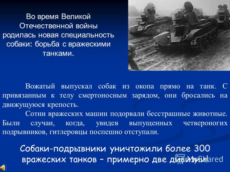 Во время Великой Отечественной войны родилась новая специальность собаки : борьба с вражескими танками. Вожатый выпускал собак из окопа прямо на танк. С привязанным к телу смертоносным зарядом, они бросались на движущуюся крепость. Сотни вражеских ма