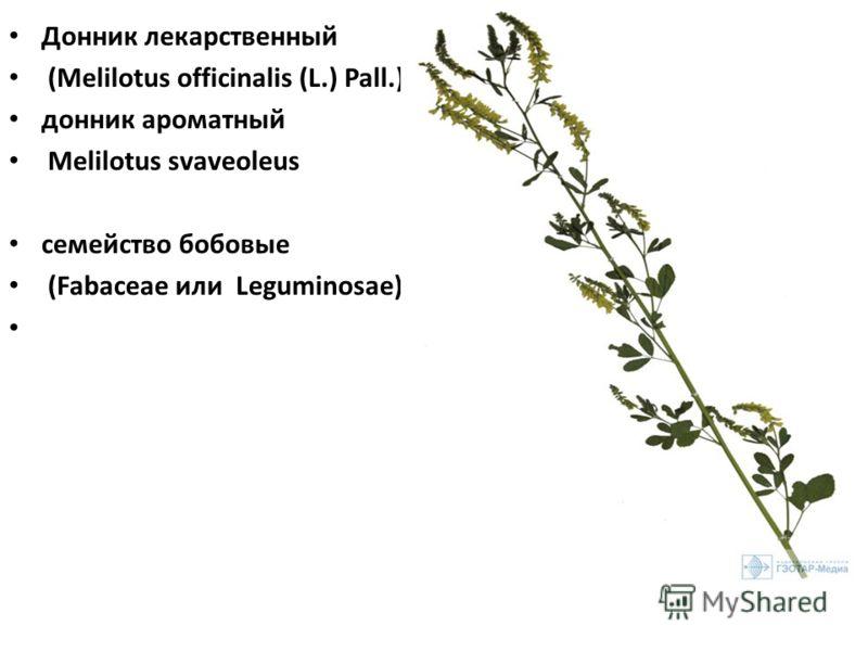 Донник лекарственный (Melilotus officinalis (L.) Pall.), донник ароматный Melilotus svaveoleus семейство бобовые (Fabaceae или Leguminosae),