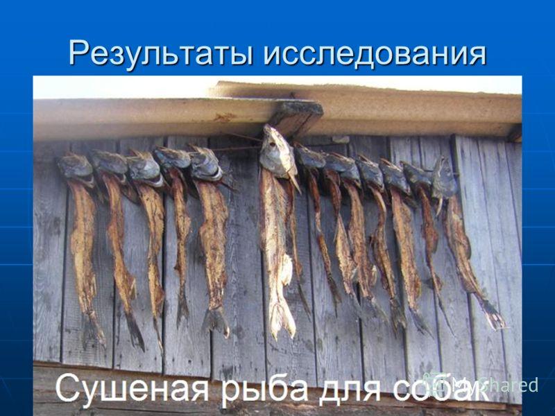 Использование рыбы и животных Использование рыбы и животных Рыболовство: давало основную пищу, а также одежду, из рыбьей кожи шили халаты, рукавицы, олочи. Рыболовство: давало основную пищу, а также одежду, из рыбьей кожи шили халаты, рукавицы, олочи