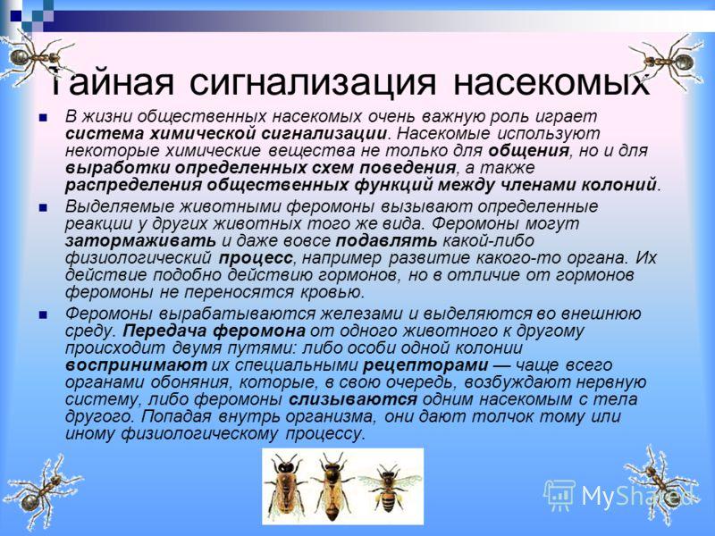 Тайная сигнализация насекомых В жизни общественных насекомых очень важную роль играет система химической сигнализации. Насекомые используют некоторые химические вещества не только для общения, но и для выработки определенных схем поведения, а также р