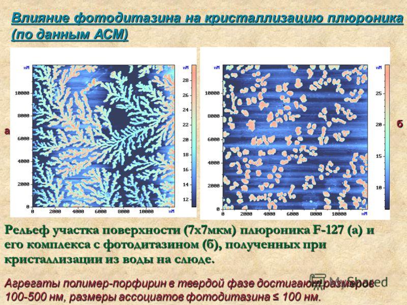 Влияние фотодитазина на кристаллизацию плюроника (по данным АСМ) Агрегаты полимер-порфирин в твердой фазе достигают размеров 100-500 нм, размеры ассоциатов фотодитазина 100 нм. а б Рельеф участкаповерхности (7х7мкм) плюроника F-127 (а) и его комплекс