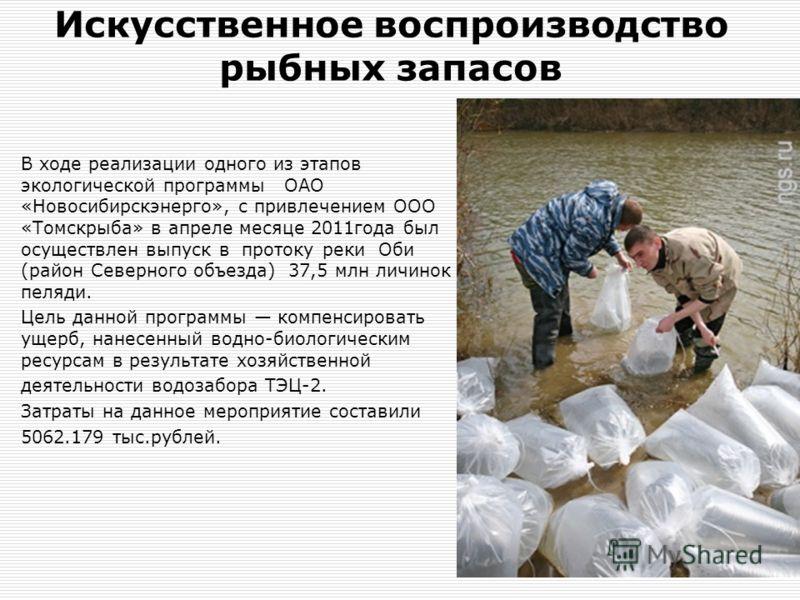 Искусственное воспроизводство рыбных запасов В ходе реализации одного из этапов экологической программы ОАО «Новосибирскэнерго», с привлечением ООО «Томскрыба» в апреле месяце 2011года был осуществлен выпуск в протоку реки Оби (район Северного объезд
