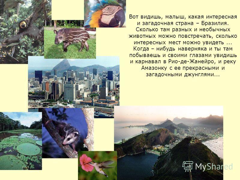 Вот видишь, малыш, какая интересная и загадочная страна – Бразилия. Сколько там разных и необычных животных можно повстречать, сколько интересных мест можно увидеть... Когда – нибудь наверняка и ты там побываешь и своими глазами увидишь и карнавал в