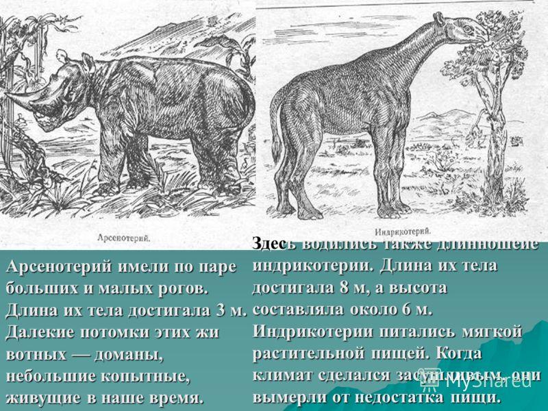 Здесь водились также длинношеие индрикотерии. Длина их тела достигала 8 м, а высота составляла около 6 м. Индрикотерии питались мягкой растительной пищей. Когда климат сделался засушливым, они вымерли от недостатка пищи. Арсенотерий имели по паре бол