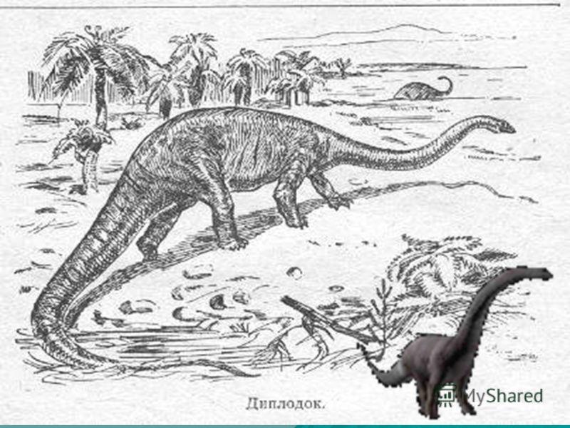 Диплодок древнейшее пресмыкающееся, его длина составляла 28 м. У него была длинная тонкая шея и длинный толстый хвост. Подобно брахиозавру, диплодок передвигался на четырех ногах, задние были длиннее передних. Большую часть своей жизни диплодок прово