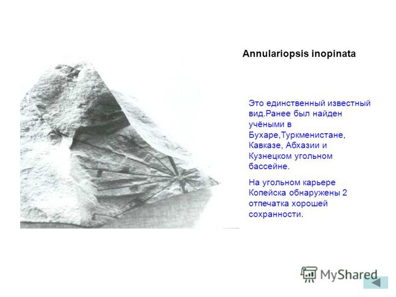 Annulariopsis inopinata Это единственный известный вид.Ранее был найден учёными в Бухаре,Туркменистане, Кавказе, Абхазии и Кузнецком угольном бассейне. На угольном карьере Копейска обнаружены 2 отпечатка хорошей сохранности.