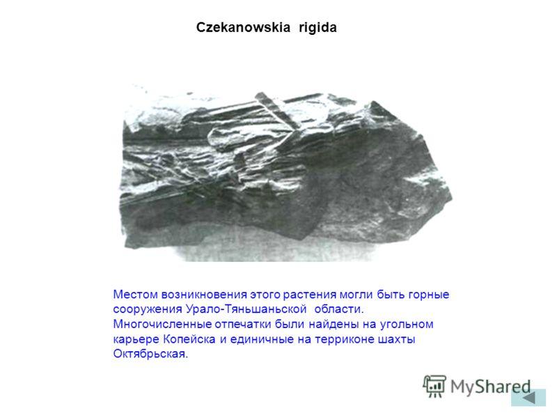Czekanowskia rigida Местом возникновения этого растения могли быть горные сооружения Урало-Тяньшаньской области. Многочисленные отпечатки были найдены на угольном карьере Копейска и единичные на терриконе шахты Октябрьская.