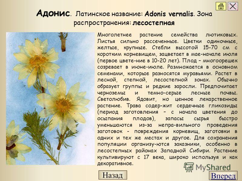 Многолетнее растение семейства лютиковых. Листья сильно рассеченные. Цветки одиночные, желтые, крупные. Стебли высотой 15-70 см с коротким корневищем, зацветает в мае-начале июля (первое цвете-ние в 10-20 лет). Плод – многоорешек созревает в июне-июл