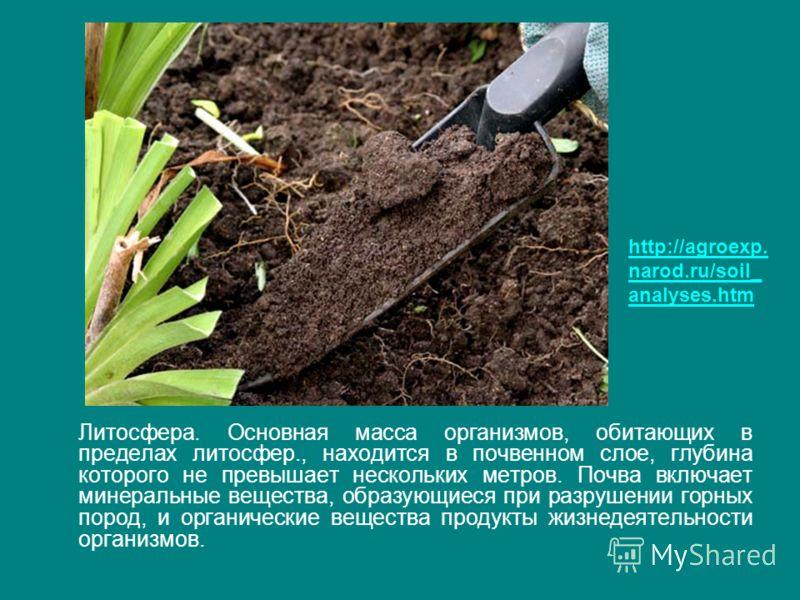 Литосфера. Основная масса организмов, обитающих в пределах литосфер., находится в почвенном слое, глубина которого не превышает нескольких метров. Почва включает минеральные вещества, образующиеся при разрушении горных пород, и органические вещества