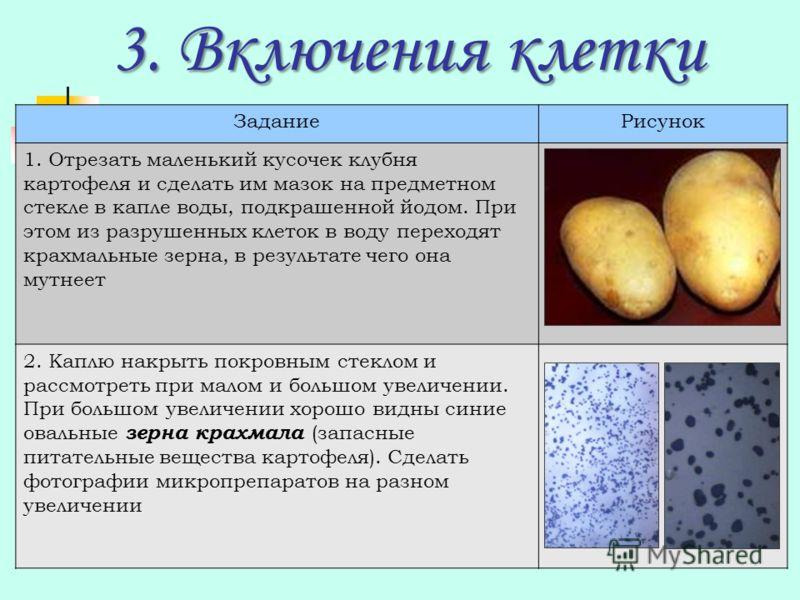 3. Включения клетки ЗаданиеРисунок 1. Отрезать маленький кусочек клубня картофеля и сделать им мазок на предметном стекле в капле воды, подкрашенной йодом. При этом из разрушенных клеток в воду переходят крахмальные зерна, в результате чего она мутне