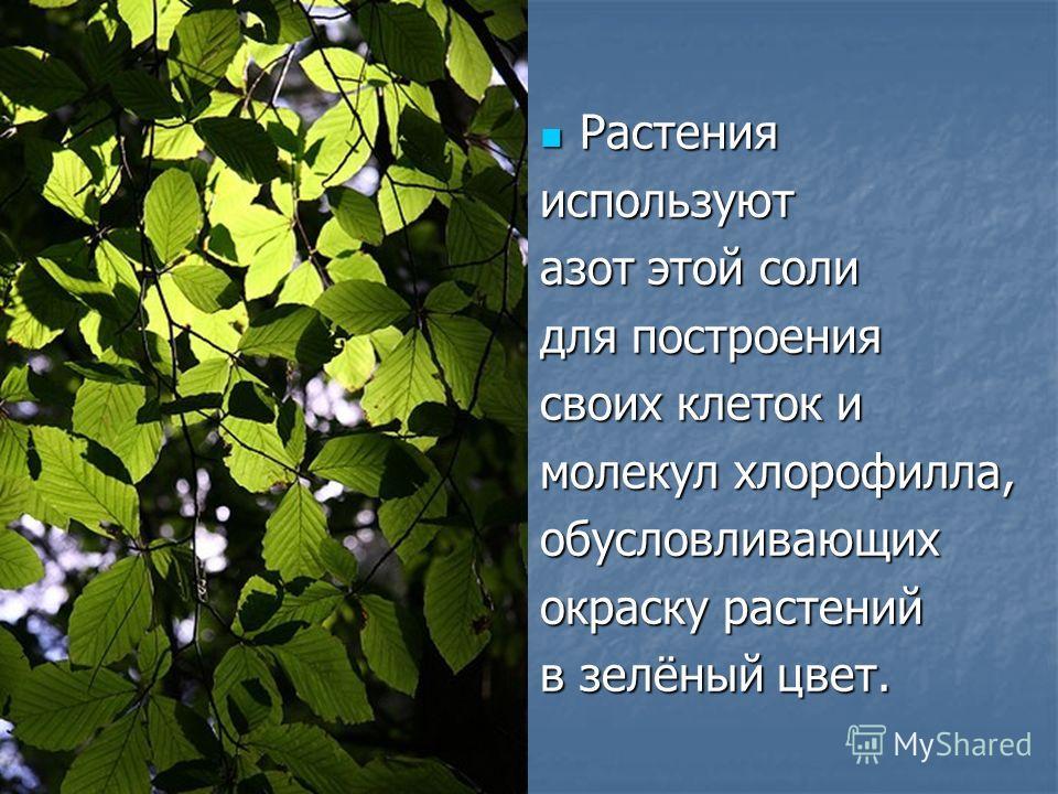 Растения Растенияиспользуют азот этой соли для построения своих клеток и молекул хлорофилла, обусловливающих окраску растений в зелёный цвет.