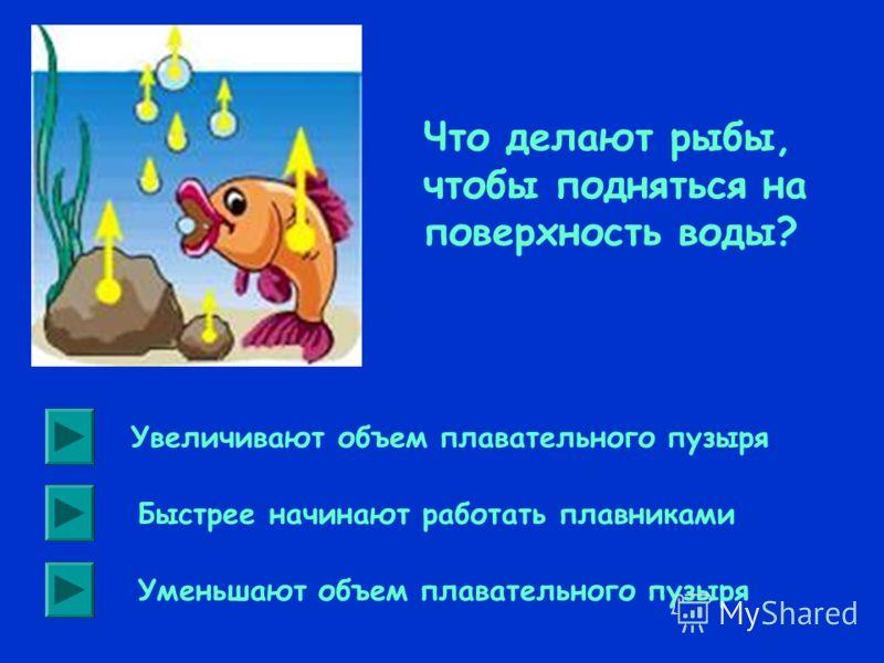 В трех сосудах налиты разные жидкости. В первом сосуде ртуть, во втором – вода, в третьем – масло. Во всех трех сосудах плавают кораблики, имеющие одинаковые массы и объемы. На какой кораблик действует со стороны жидкостей большая выталкивающая сила?