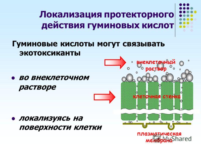 во внеклеточном растворе внеклеточный раствор клеточная стенка плазматическая мембрана Локализация протекторного действия гуминовых кислот локализуясь на поверхности клетки Гуминовые кислоты могут связывать экотоксиканты