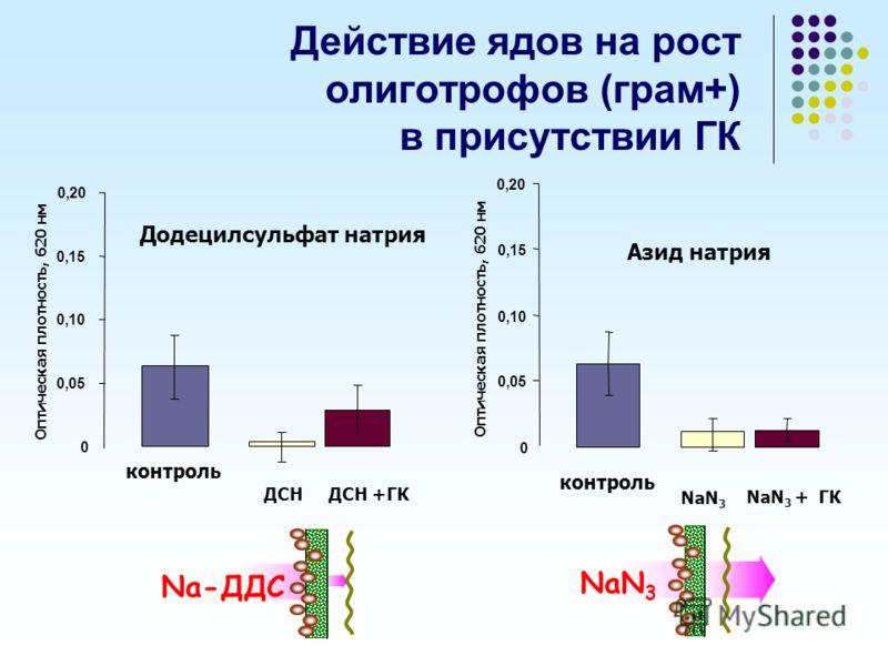 Действие ядов на рост олиготрофов (грам+) в присутствии ГК Додецилсульфат натрия Оптическая плотность, 620 нм ДСН ДСН +ГК контроль 0 0,05 0,10 0,15 0,20 Азид натрия 0 0,05 0,10 0,15 0,20 NaN 3 NaN 3 + ГК Оптическая плотность, 620 нм контроль NaN 3 Na