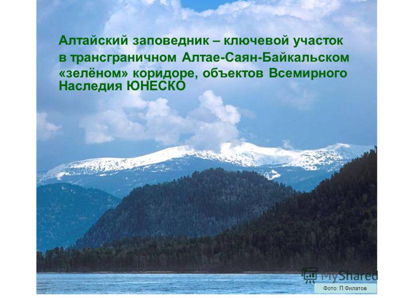Алтайский заповедник – ключевой участок в трансграничном Алтае-Саян-Байкальском «зелёном» коридоре, объектов Всемирного Наследия ЮНЕСКО Фото: П.Филатов