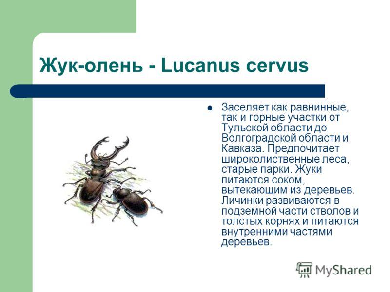 Жук-олень - Lucanus cervus Заселяет как равнинные, так и горные участки от Тульской области до Волгоградской области и Кавказа. Предпочитает широколиственные леса, старые парки. Жуки питаются соком, вытекающим из деревьев. Личинки развиваются в подзе
