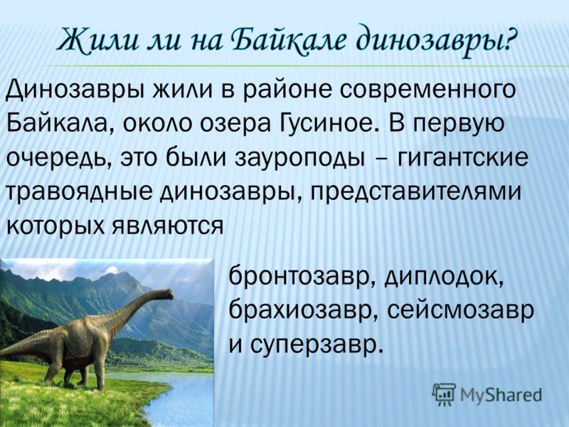 Динозавры жили в районе современного Байкала, около озера Гусиное. В первую очередь, это были зауроподы – гигантские травоядные динозавры, представителями которых являются бронтозавр, диплодок, брахиозавр, сейсмозавр и суперзавр.