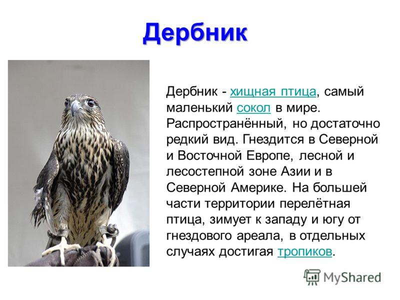 Дербник - хищная птица, самый маленький сокол в мире. Распространённый, но достаточно редкий вид. Гнездится в Северной и Восточной Европе, лесной и лесостепной зоне Азии и в Северной Америке. На большей части территории перелётная птица, зимует к зап