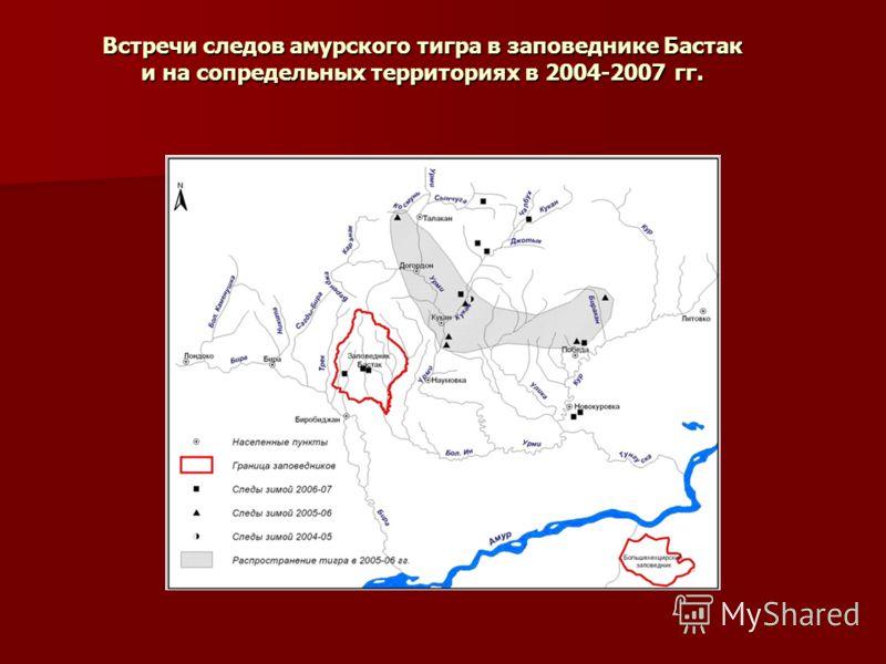 Встречи следов амурского тигра в заповеднике Бастак и на сопредельных территориях в 2004-2007 гг.