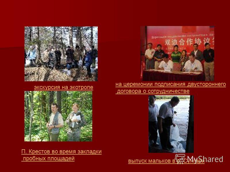 экскурсия на экотропе П. Крестов во время закладки пробных площадей на церемонии подписания двустороннего договора о сотрудничестве выпуск мальков в р. Сунгари