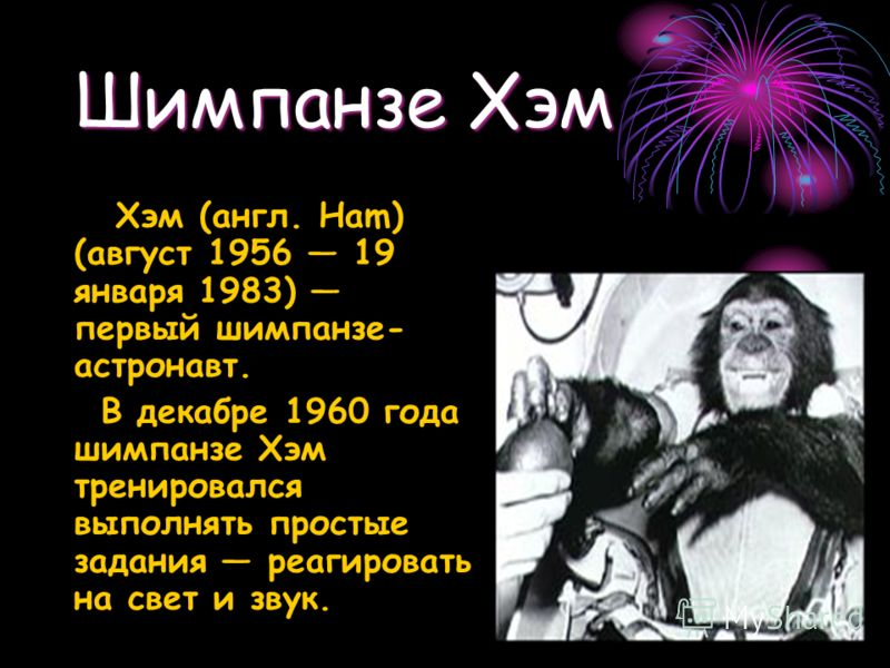 Шимпанзе Хэм Хэм (англ. Ham) (август 1956 19 января 1983) первый шимпанзе- астронавт. В декабре 1960 года шимпанзе Хэм тренировался выполнять простые задания реагировать на свет и звук.