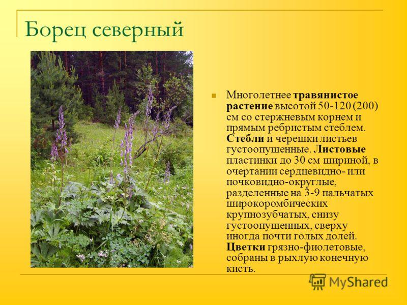 Борец северный Многолетнее травянистое растение высотой 50-120 (200) см со стержневым корнем и прямым ребристым стеблем. Стебли и черешки листьев густоопушенные. Листовые пластинки до 30 см шириной, в очертании сердцевидно- или почковидно-округлые, р